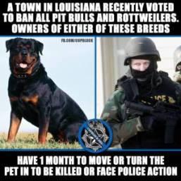 killing pit bulls rottweilers in la help